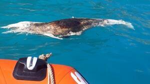 El delfín el Cala del Moraig