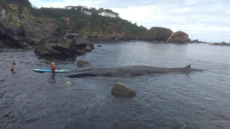 Imagen de la ballena atascada en la Cala Figo, Asturias
