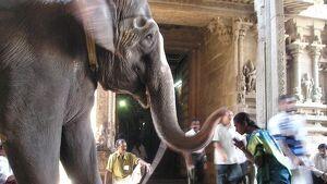 Un elefante embiste a 18 personas ocasionándoles heridas de diferente consideración en una celebración budista