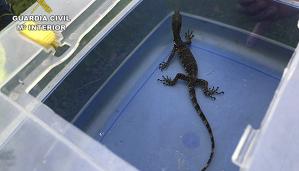 Imagen del ejemplar de dragón asiático encontrado en un contenedor de mercancías en Bilbao