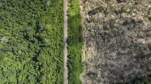 La deforestación en 2019 fue casi cuatro veces mayor que los años anteriores