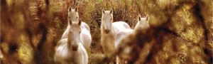 Reserva Natural de Sebes, a Flix
