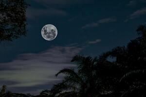 Représentation de la Pleine Lune sous des arbres