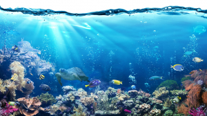 Read these ocean quotes if you like the way it makes you feel.