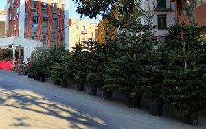 La Paeria inicia la campanya de recollida d'arbres de Nadal