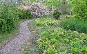 L'Arborètum ofereix visites a la tardor per conèixer els arbres urbans o els que fan bolets