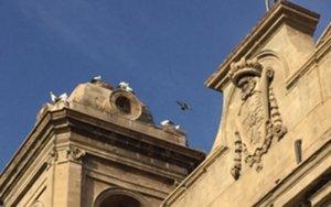 Territori i Sostenibilitat autoritza al bisbat a retirar els nius de cigonya de la Catedral Nova de Lleida
