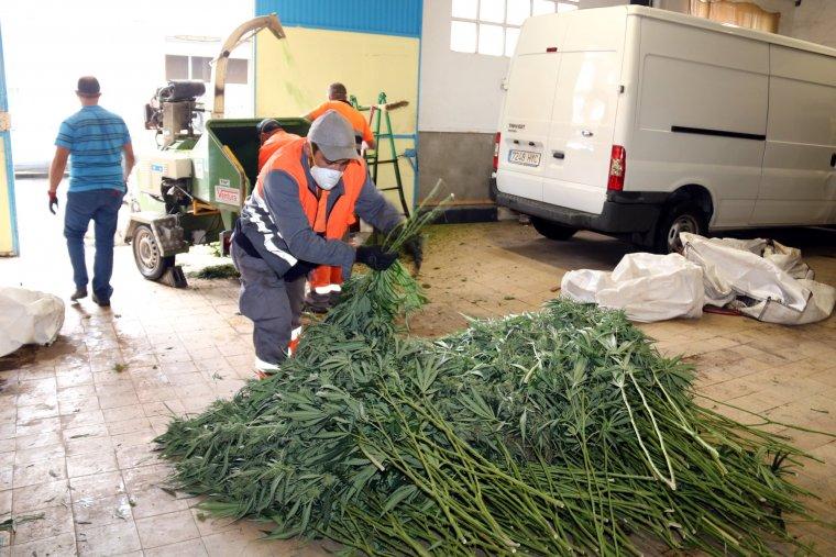 Les plantes s'han esmicolat per poder-les traslladar més fàcilment.