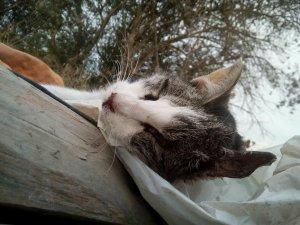 Imatge d'un gat sepultat a La Chispa