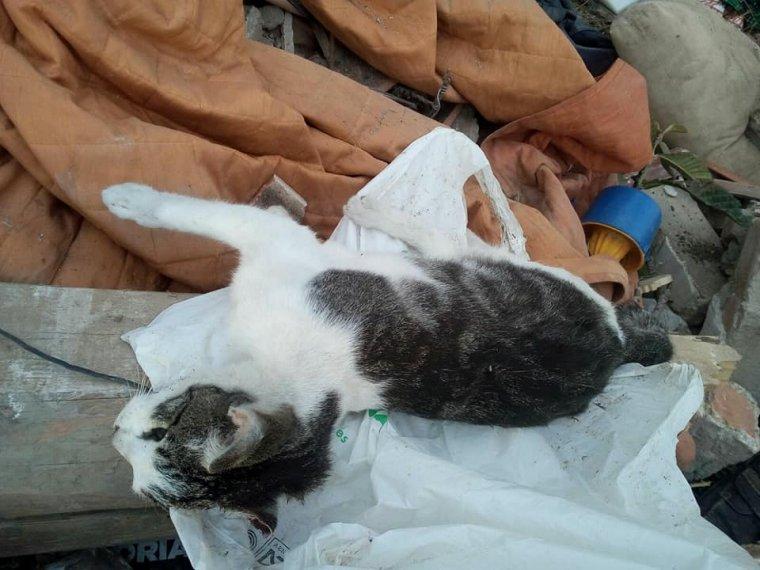 Imatge d'un dels gats morts