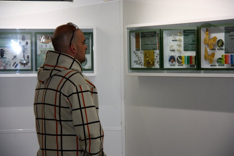 Un visitant observant un dels plafons del Museu de les Papallones de Catalunya