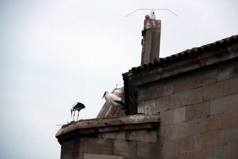 Imatge de les cigonyes al lloc on hi havia un dels nius que s'han retirat, en un dels contraforts de la Catadral Nova de Lleida