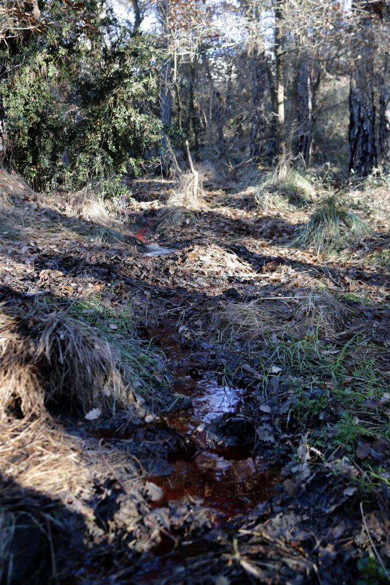 La zona afectada pels abocaments d'aigua tenyida de sang provinent presumptament de l'escorxador de Navès