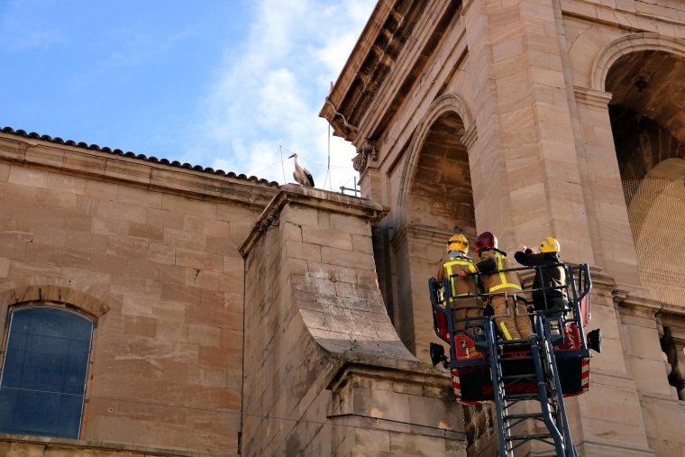 Moment en què han intervingut els Bombers, quan comprovaven si una cigonya estava atrapada en una de les xarxes de la Catedral de Lleida