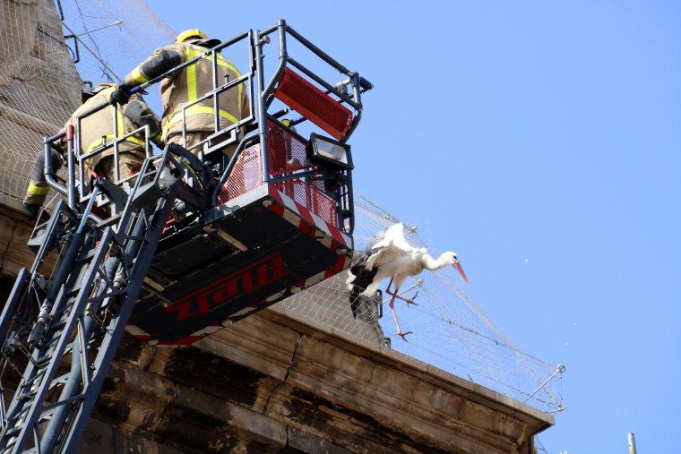 Pla mig on es pot veure els Bombers enfilats a la cistella del camió escala intentant rescatar una cigonya atrapada a la xarxa de la Catedral Nova de Lleida