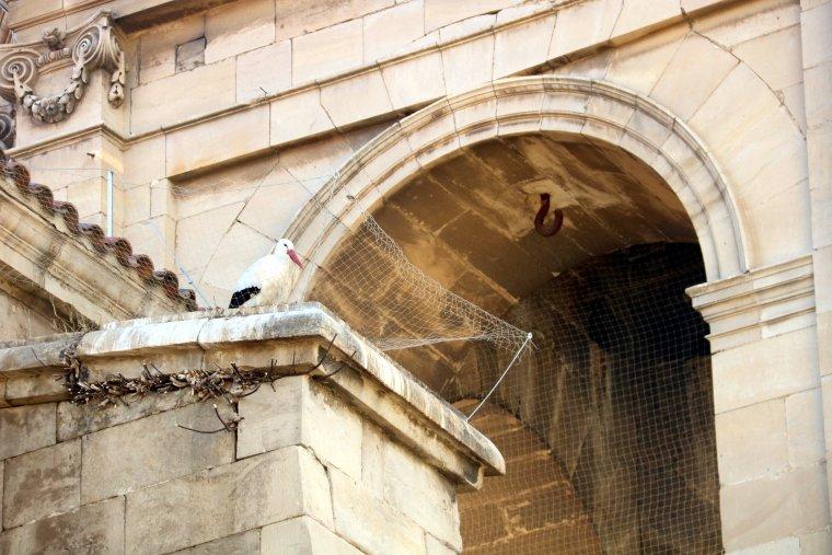 Una cigonya dins d'una de les xarxes de la Catedral de Lleida