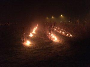 Pla obert on es poden veure diversos cremadors per fer pujar la temperatura en una finca de fruiters durant la nit a la Portella