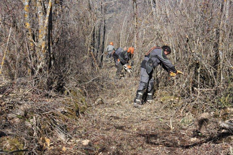 Diversos membres de la brigada de recuperació de camins fent tasques de desbrossament entre els nuclis d'Alàs i Artedó