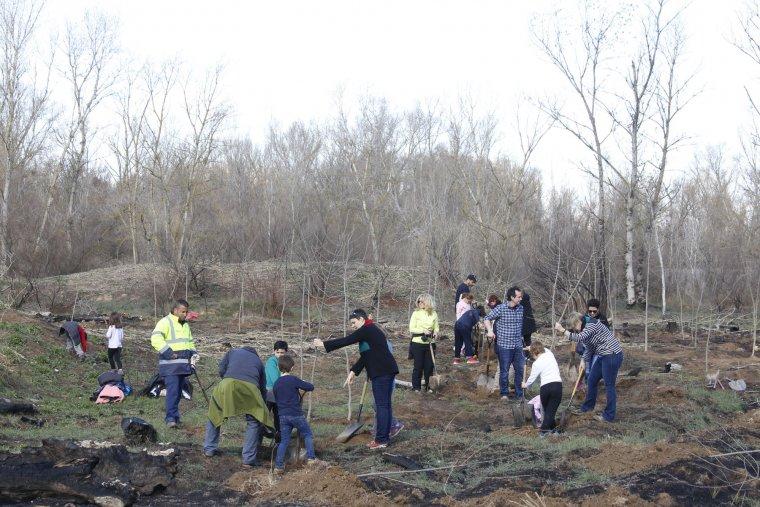 Està previst que en aquesta zona de la Mitjana es plantin uns 550 arbres i prop de 230 plantes arbustives.