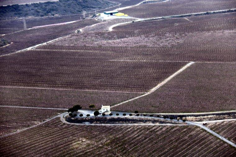 Vista aèria dels camps florits del Baix Segre.
