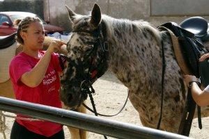 Pla mig d'una alumna de l'INS Mollerussa pentinant un cavall