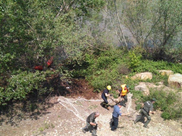 Imatge general del moment que el cabirol atrapat a les comportes del riu Segre a Lleida ha estat alliberat aigües amunt