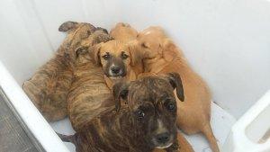Els cadells una vegada rescatats