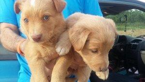 Els dos cadells abandonats en una granja d'Almacelles