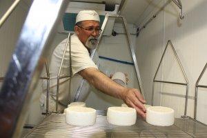 Pla mig del formatger de Mas d'Eroles, Salvador Maura, col·locant alguns dels seus formatges que estan en procés d'elaboració