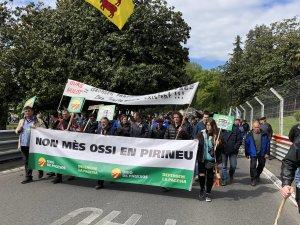 Protesta a Pau, França, contra els danys de l'ós al Pirineu.