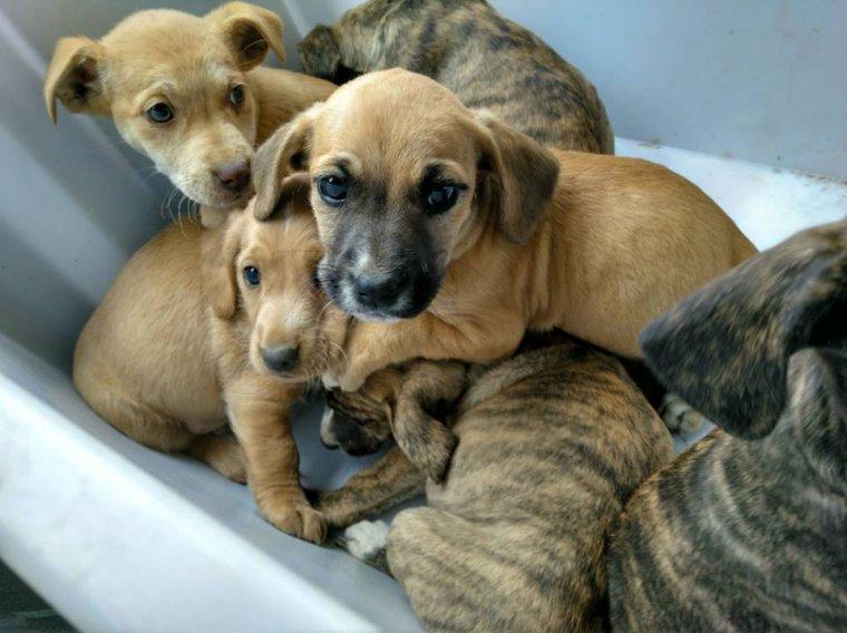 Imatge dels cadells abandonats