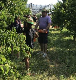 Els participants van poder collir ells mateixos la fruita.