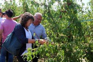 La consellera d'Agricultura, Teresa Jordà, i el president de Fruits de Ponent, Sebastià Escarp
