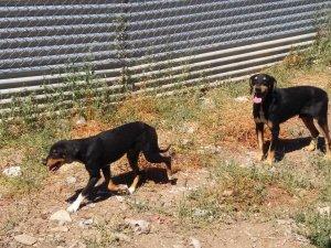 Pla general de dos dels set gossos que s'han quedat sense propietari