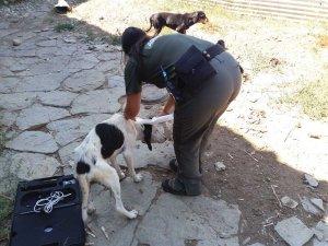 Un Agent Rural comprovant l'estat d'un gos a Claramunt