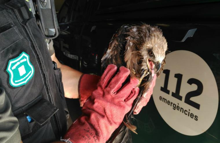 Imatge d'una de les aus rescatades