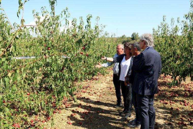 La consellera d'Agricultura, Teresa Jordà, visita un camp d'Alcarràs afectat per la pedregada de divendres