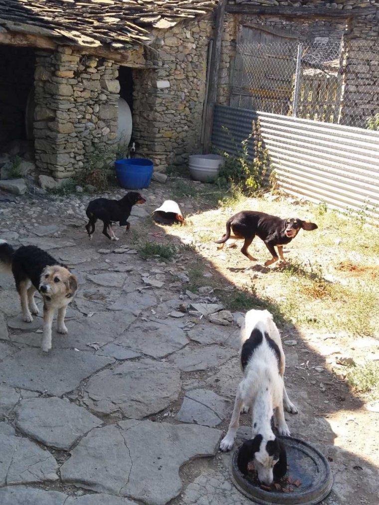 Pla general de quatre gossos que s'han quedat sense propietari