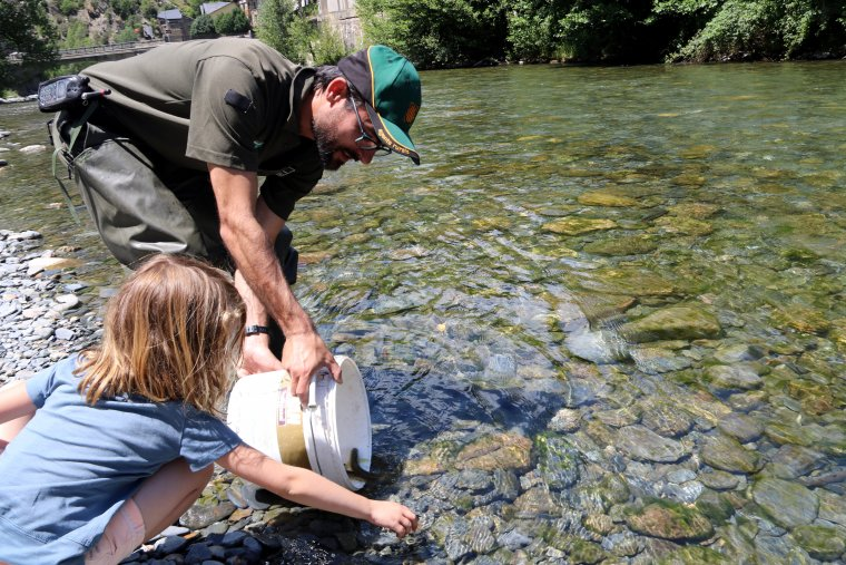 Un Agent Rural alliberant truites al riu Noguera de Cardós