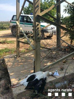 Imatge d'una cigonya morta a les Garrigues