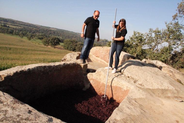 Imatge d'on fermenta el vi