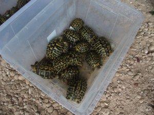 Imatge de les tortugues