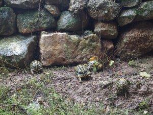 Imatge de les tortugues en llibertat