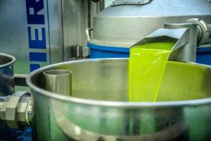 Imatge de l'oli verd de qualitat que ha començat a produir la Cooperativa de Juncosa