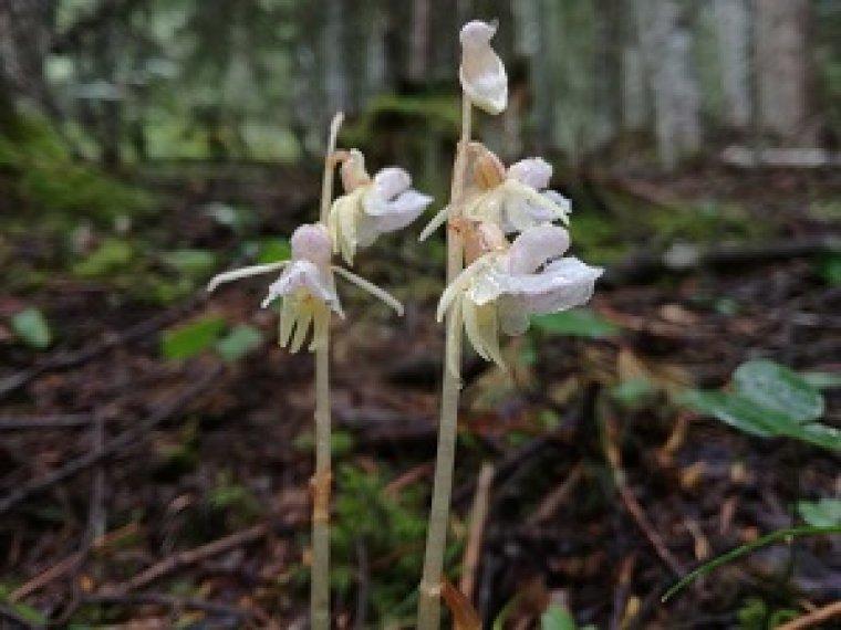 Imatge de la planta