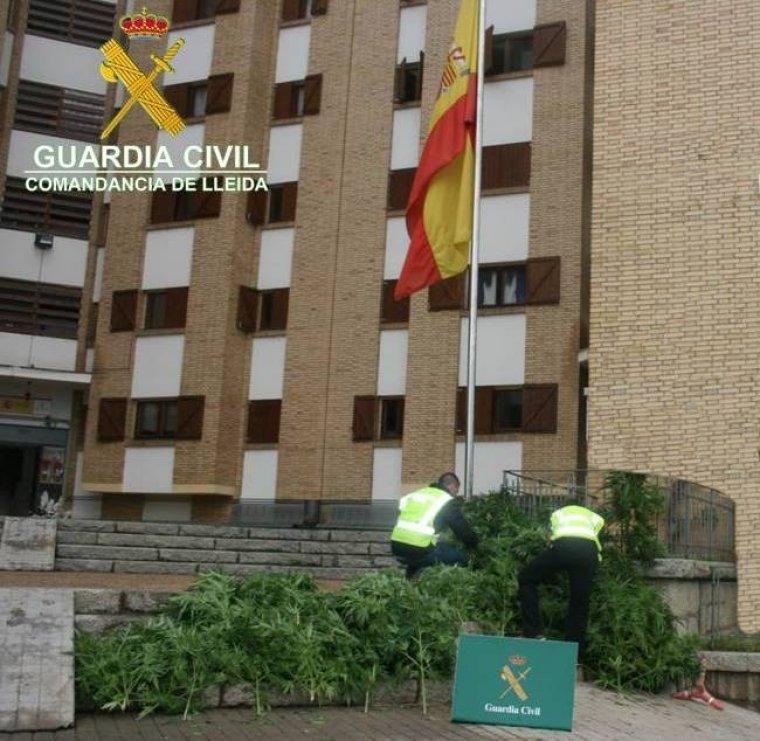 Imatge de les plantes decomissades a l'Alt Urgell