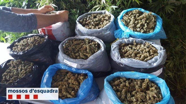 La droga comissada estaria valorada en uns 100.000 euros.