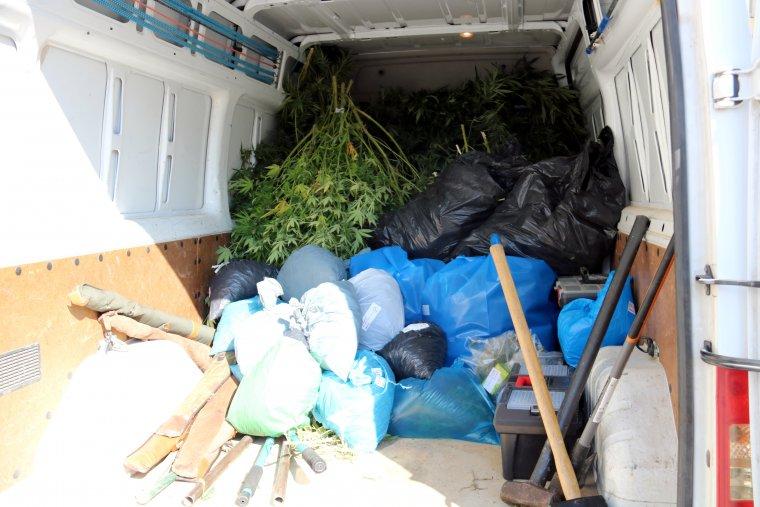 Marihuana comissada en l'operació policial contra el tràfic de drogues, a Alfarràs