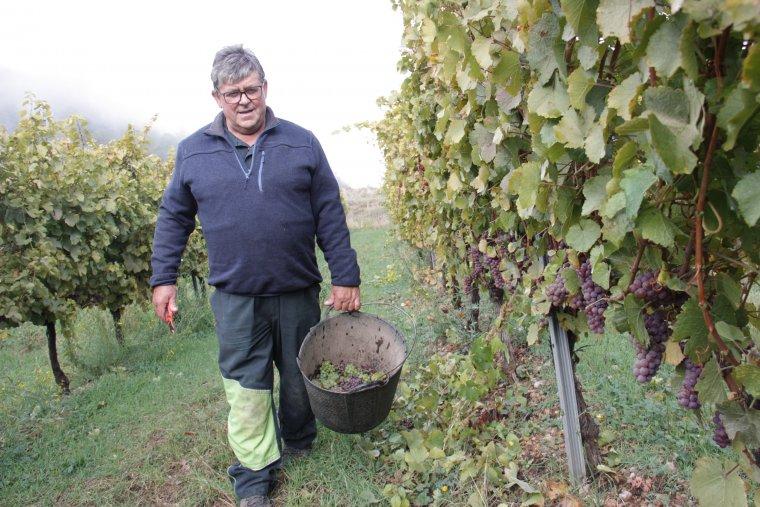 Pla general del viticultor Xavier Ribes, a la seva finca de Montan de Tost