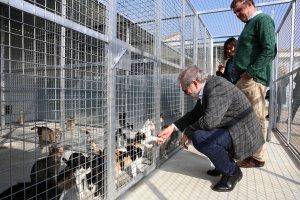 Imatge de l'alcalde amb gats